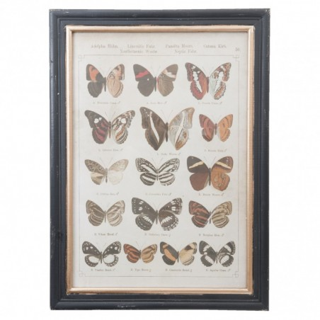 Grafika w czarno- złotej ramie z 16 motylami