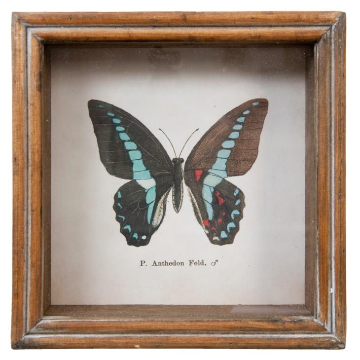 Grafika w drewnianej ramie z czarno - błękitnym motylem Clayre & Eef 63730