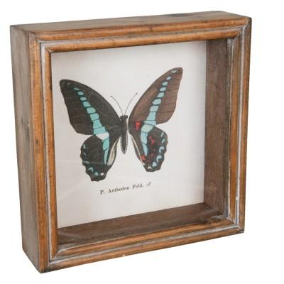 Grafika w drewnianej ramie z czarno - błękitnym motylem