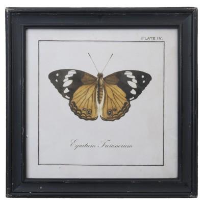 Grafika z miodowym motylem