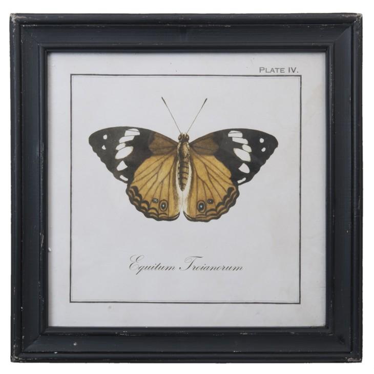 Grafika w drewnianej ramie z miodowym motylem Clayre & Eef 63724