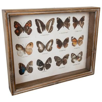 Grafika w drewnianej ramie z 12 motylami